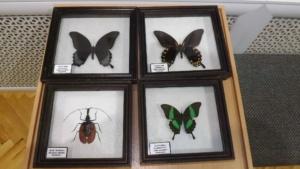 Гигантские насекомые (5)