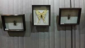 Гигантские насекомые (4)